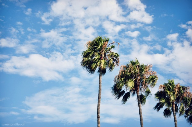 Sweets and Life: Palm Trees